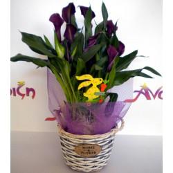 Plant In Pot 006