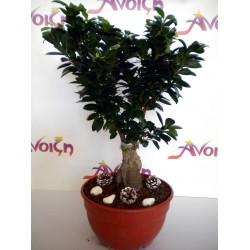 Bonsai Plant 001