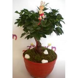 Bonsai Plant 002