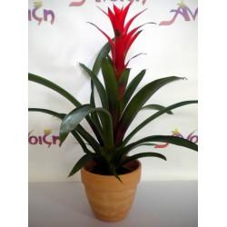 Plant In Pot 011