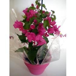 Plant In Pot 012