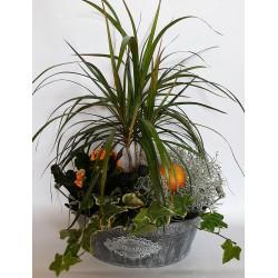 online florist shop in drama city Greece. Send plants in drama