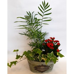send flowers and plants online in drama