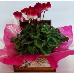 Online flower shop. Florists in Drama city