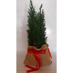 Send flowers in Drama, christmas flower shop gift