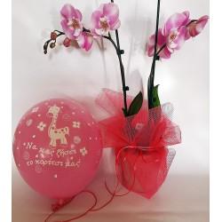 λουλούδια για μωράκι, ορχιδέα για μωρό