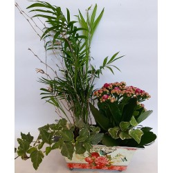 Flower delivery in drama, send plants and flowers in drama
