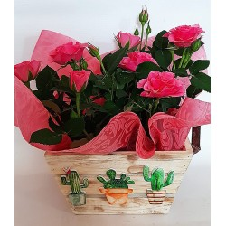 Send pots to Drama. drama florists, rose plant for mother's day